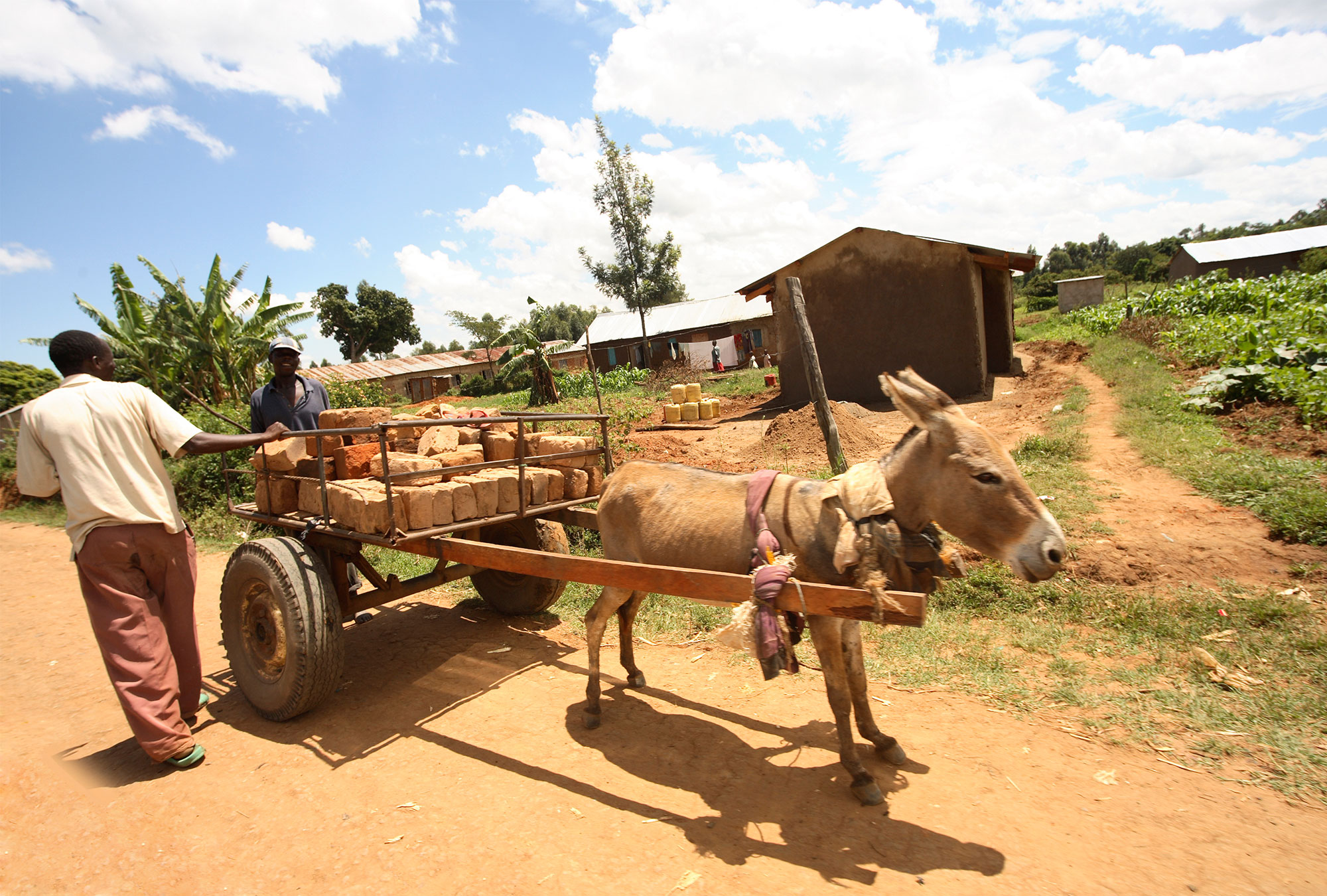 Two men with cart pulled by donkey