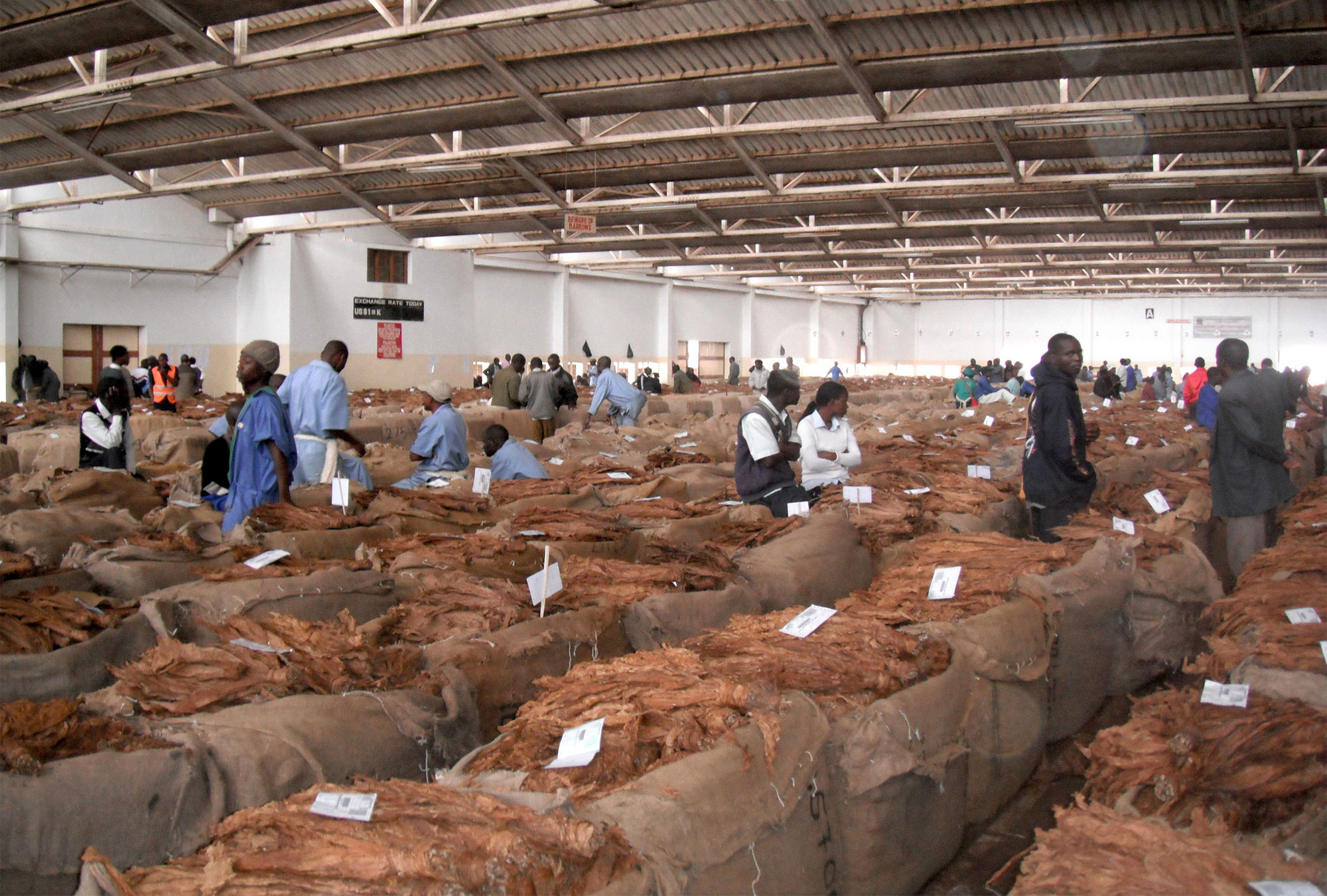warehouse full of sacks of brown tobacco leaves