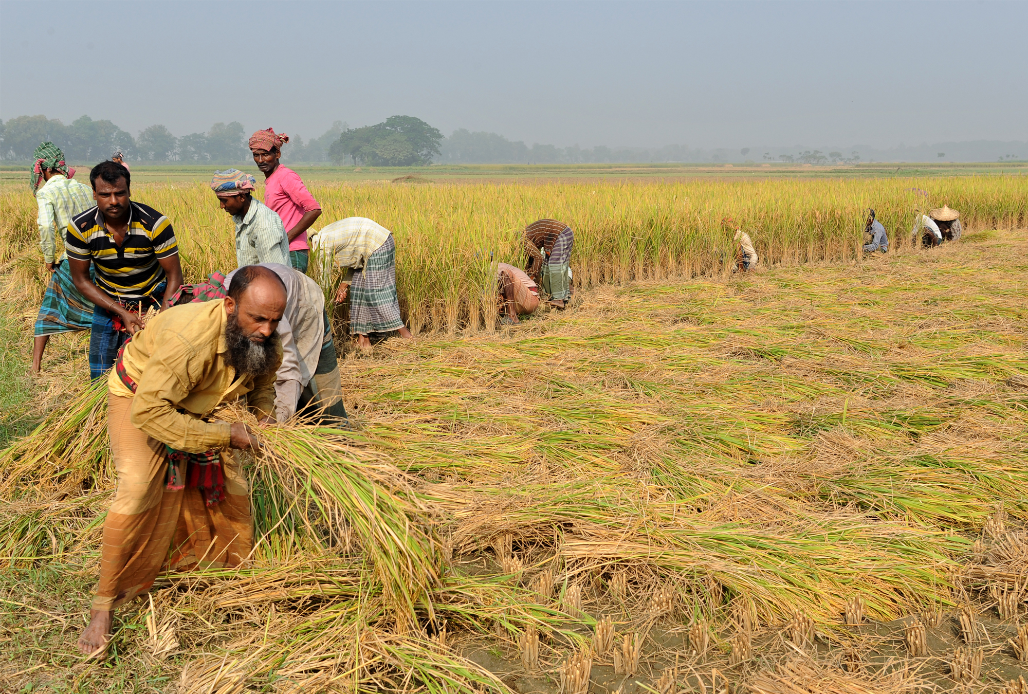 Photo of rice farmers in Bangladesh
