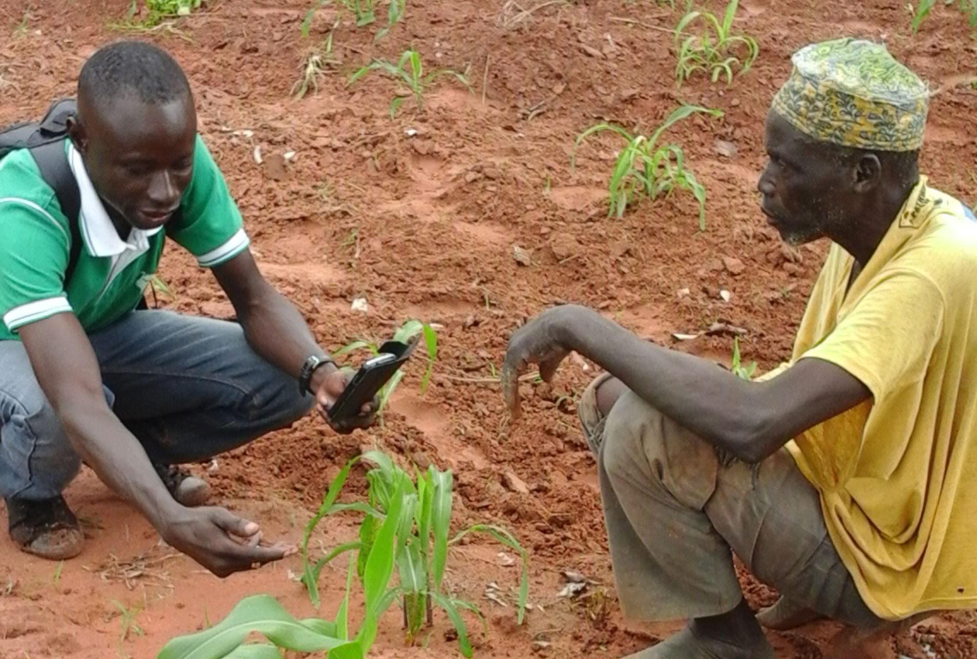 Two men kneel down to inspect crop