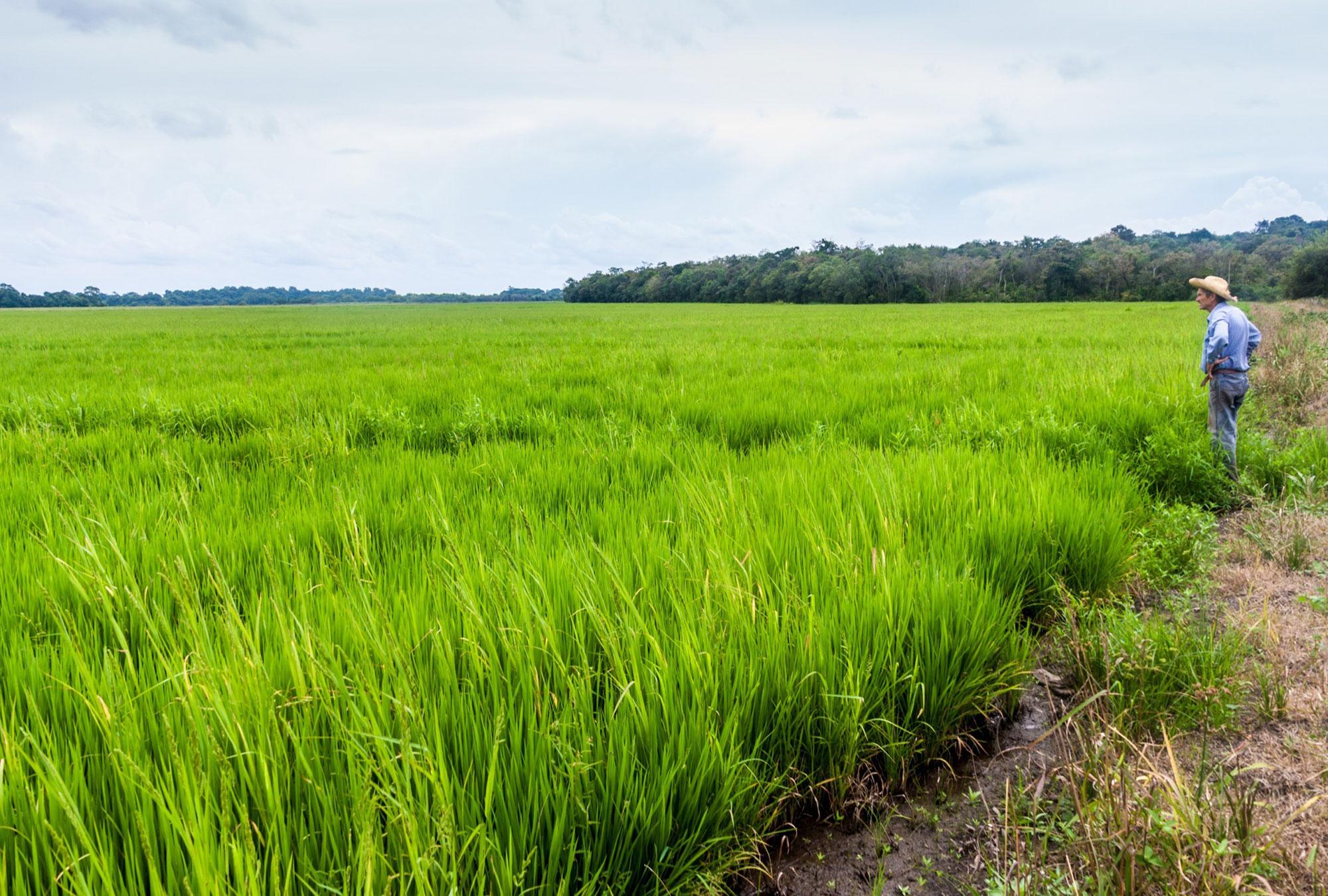 Farmer stands in a field