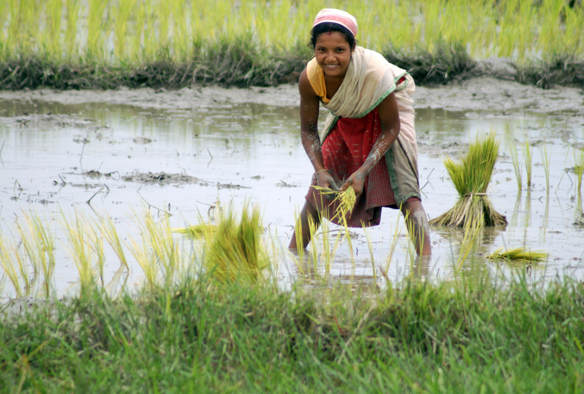 Woman stands in rice paddy