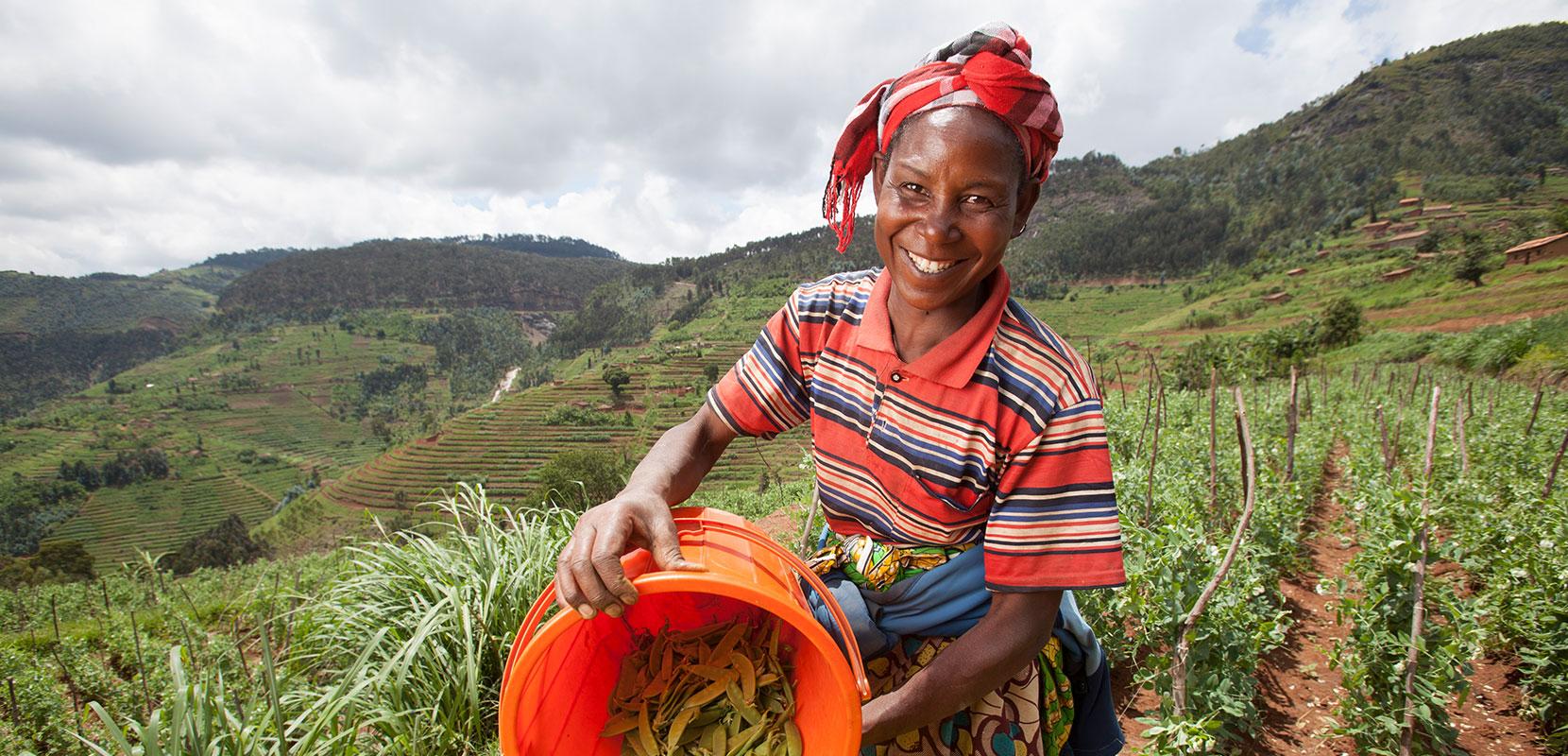 Woman harvesting peas
