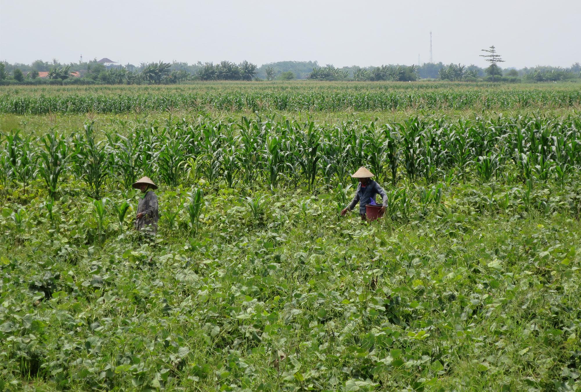 Farmers working in a field