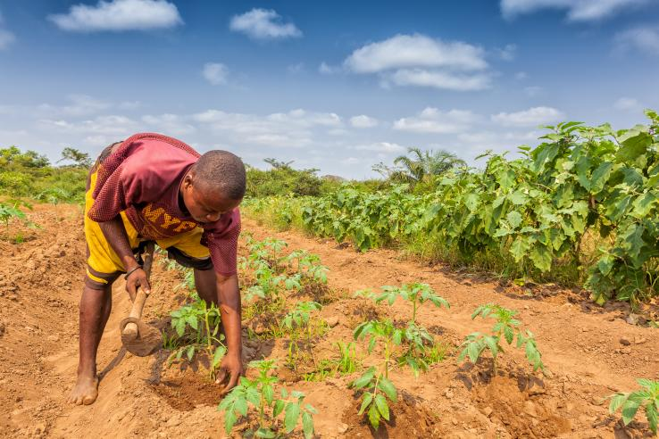man working on a farm in Angola