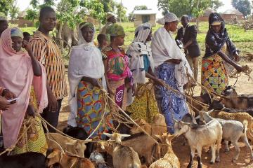 People holding goats by leashes