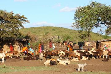 Masai herders stand among a herd of goats