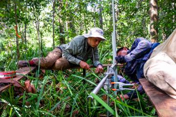 Researchers from monitor carbon in peat swamp